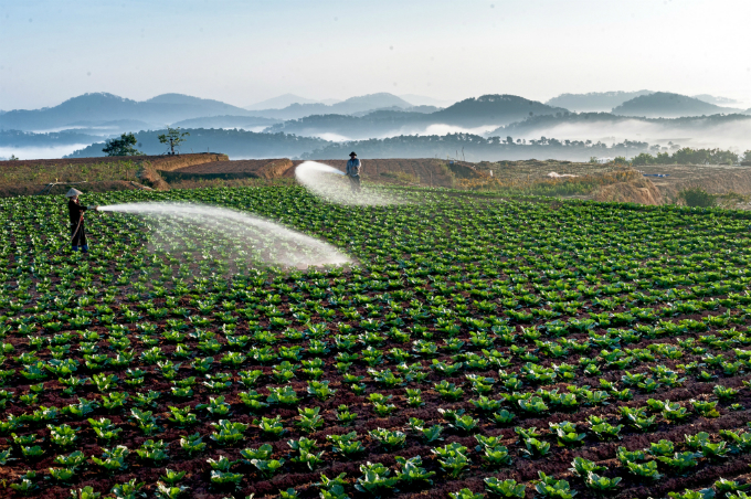 A vegetables farm in Da Lat